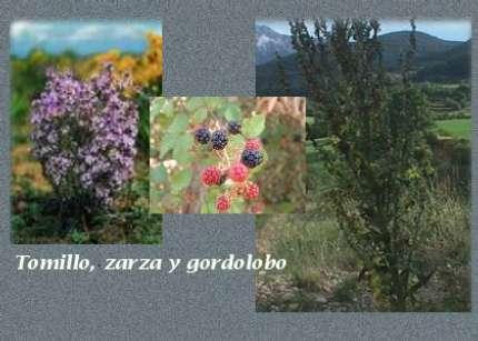 external image zarza.jpg